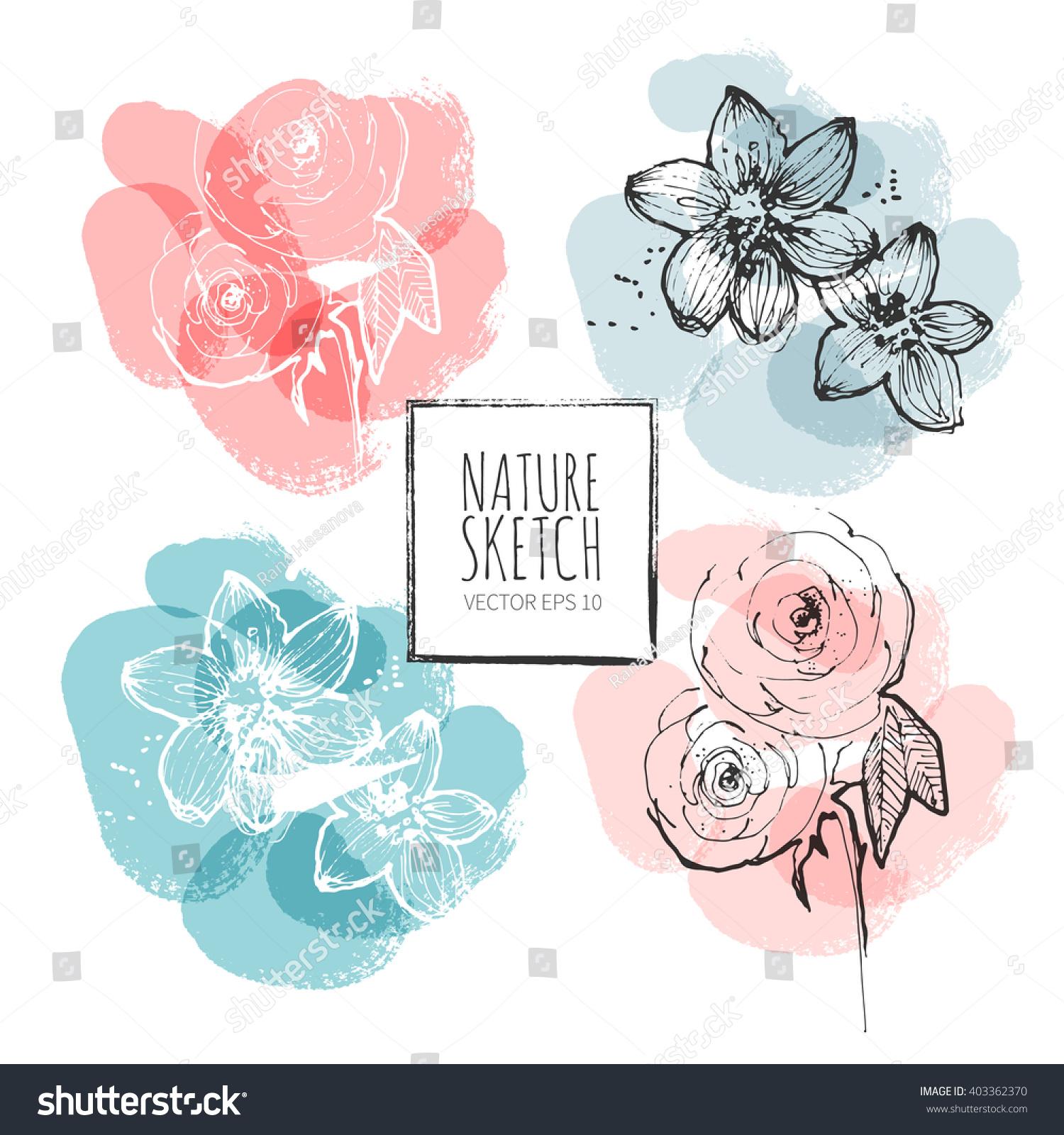 Line Art Watercolor : Ink watercolor flower line art background stock vector