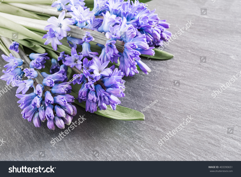 Royalty Free Asparagaceae Family Blooming Hyacinths 403390651
