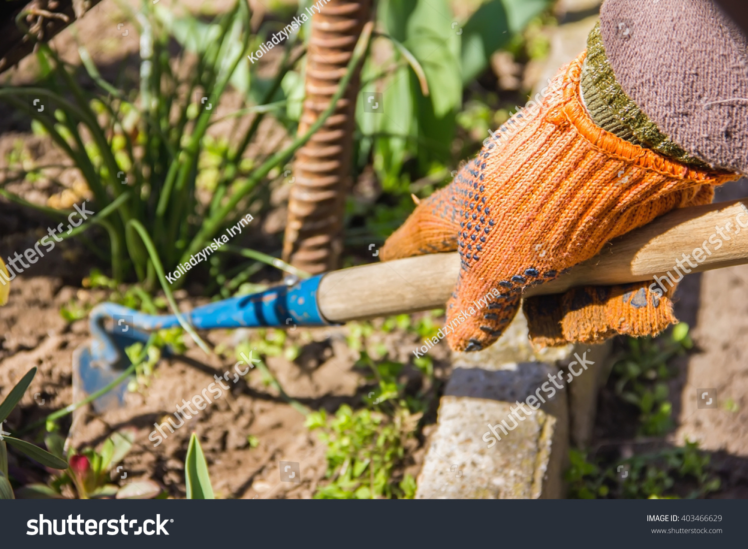 Online image photo editor shutterstock editor - Gardening works in october winter preparations ...