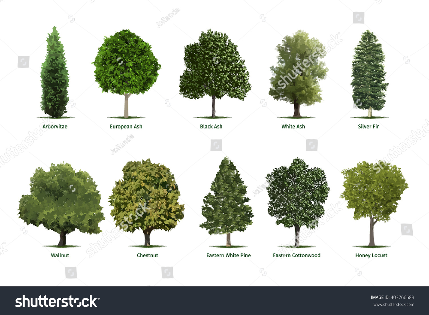Pin Fir Tree Types And Facts On The Species On Pinterest