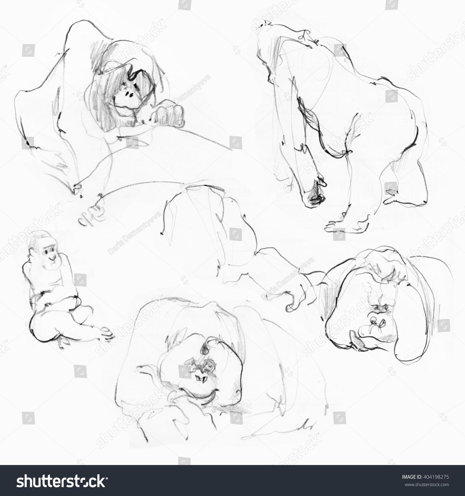 monkeys zoo pencil sketches stock illustration 404198275