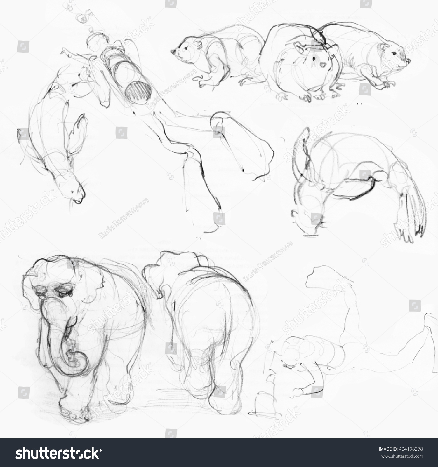 Animals in the zoo pencil sketches