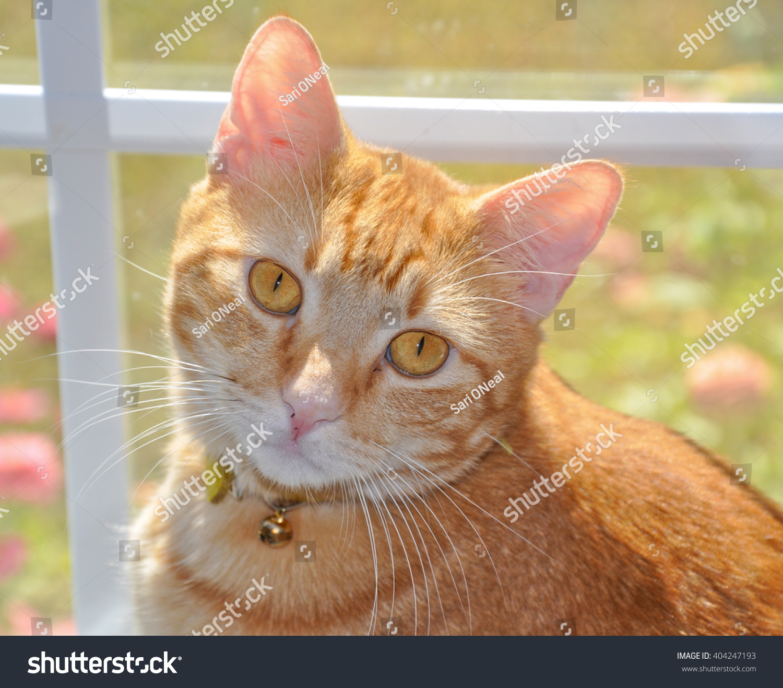 stock-photo-handsome-orange-tabby-cat-wi