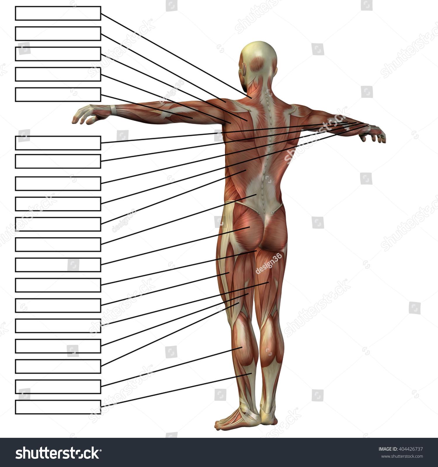 Concept 3 D Male Human Anatomy Man Stock Illustration 404426737