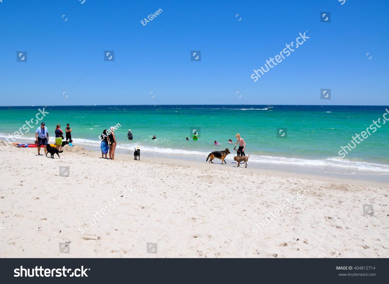 Animal Exercise Beach And Indian Ocean In Hillaryswestern Australia Hillarys Dog Beach