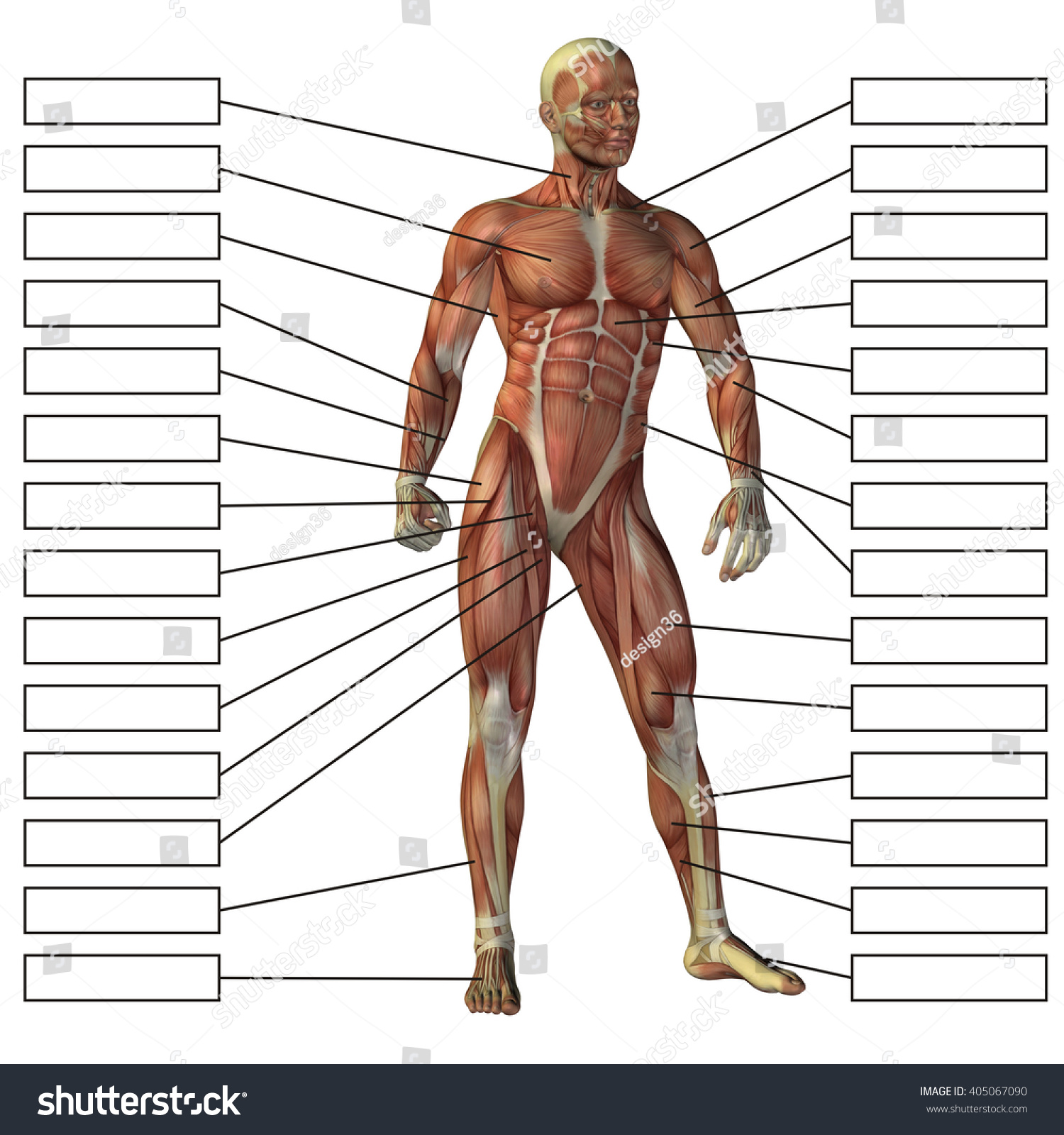 Concept 3 D Male Human Anatomy Man Stock Illustration 405067090 ...