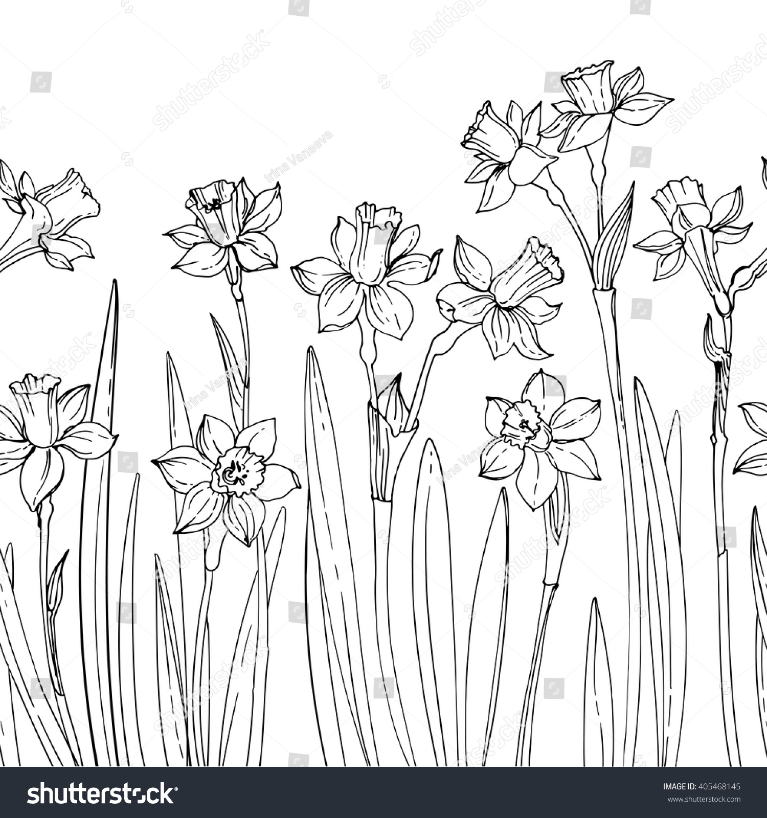 Pattern Of Vector Drawings Flowers Daffodils Line Drawn On A White Background Spring