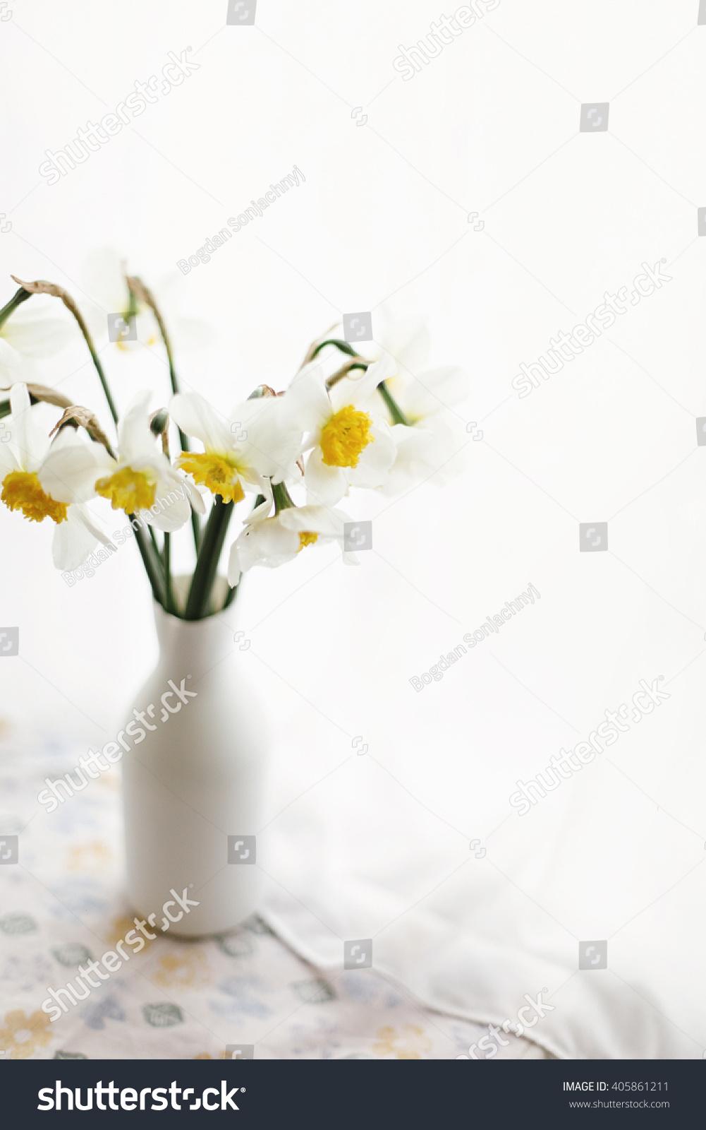 Beautiful amazing yellow daffodils modern white stock photo beautiful amazing yellow daffodils in modern white vase on background of morning light from window reviewsmspy