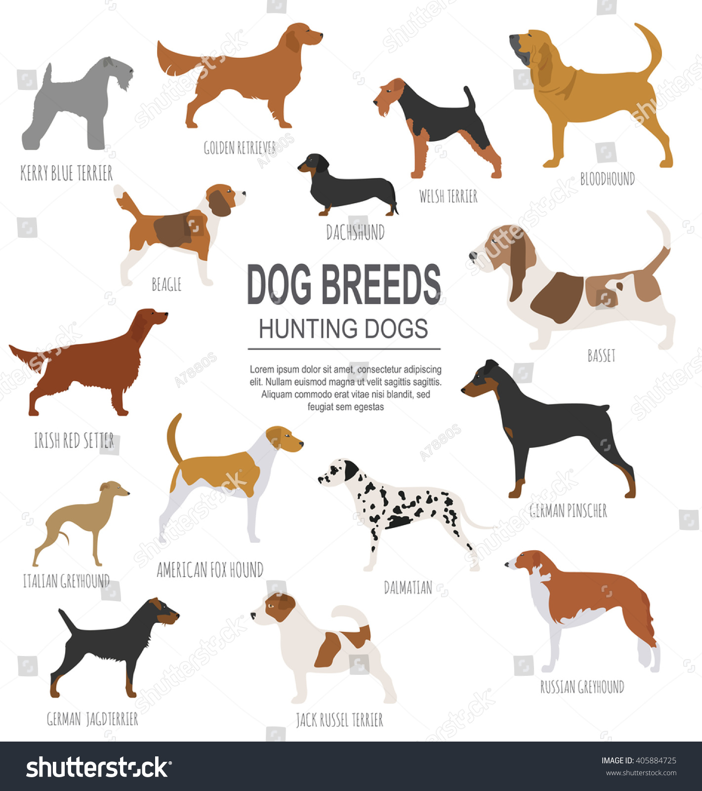 Hunting Tracking Dog Breeds