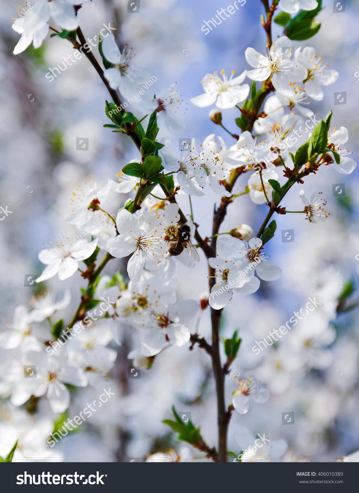 White Spring Flowers Beautiful Nature Scene Stock Photo Edit Now