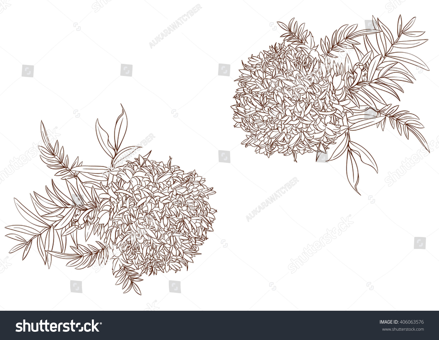 Marigold Flower Line Drawing : Marigold drawing flower stock vector shutterstock