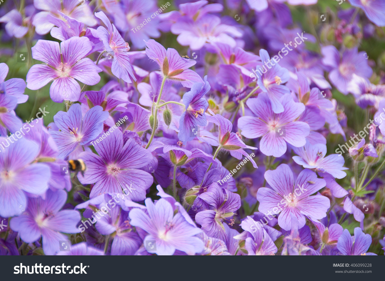 天竺部落在英国夏季蜜蜂与蜥蜴采集动物-花园花粉v部落葵花哥群号图片