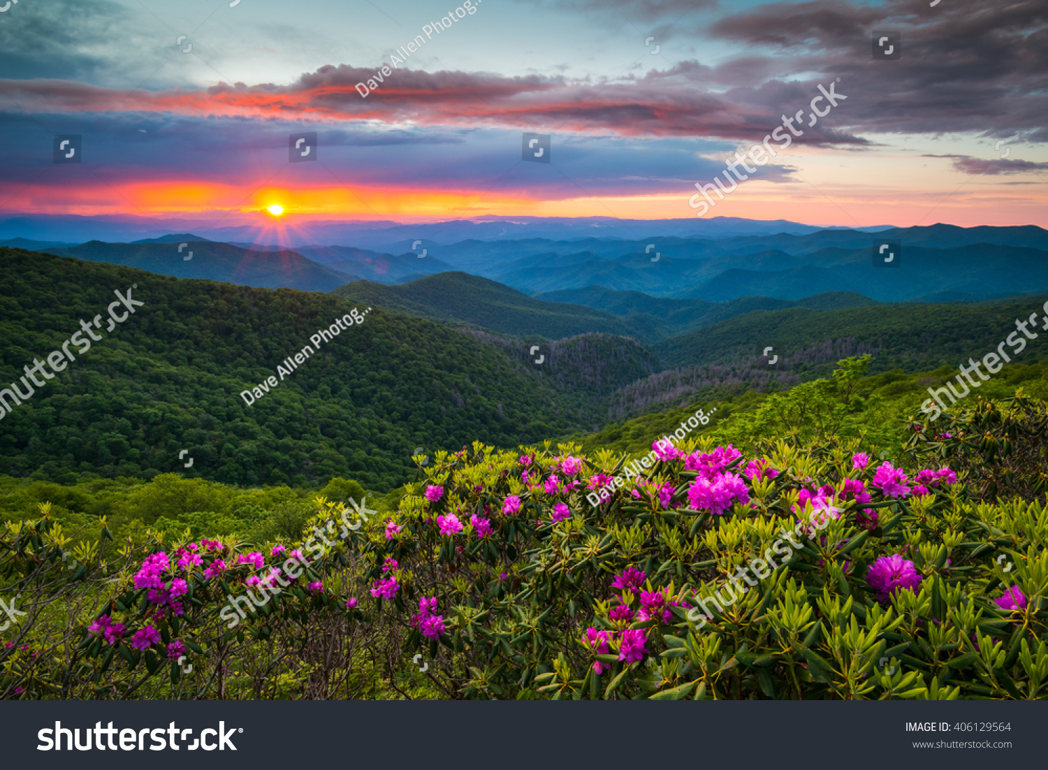 North carolina blue ridge parkway spring stock photo 406129564 north carolina blue ridge parkway spring flowers scenic landscape south of asheville nc in the dhlflorist Image collections