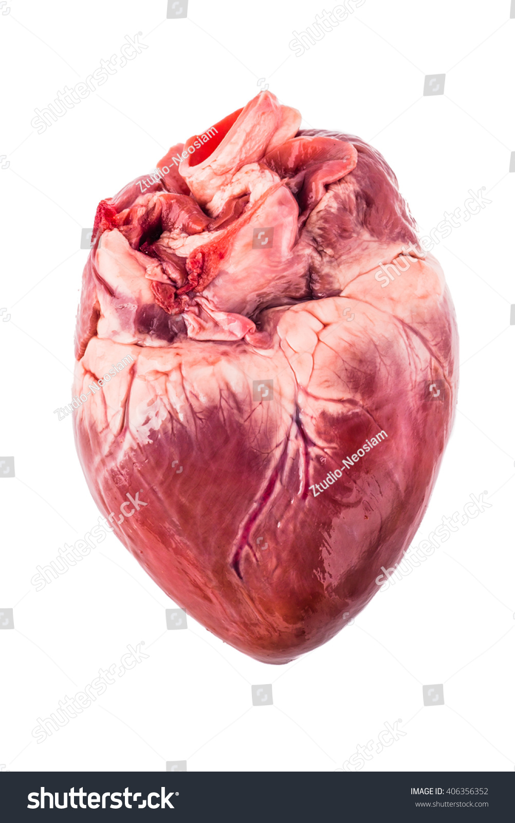 Pig Heart On White Background Stock Photo Royalty Free 406356352