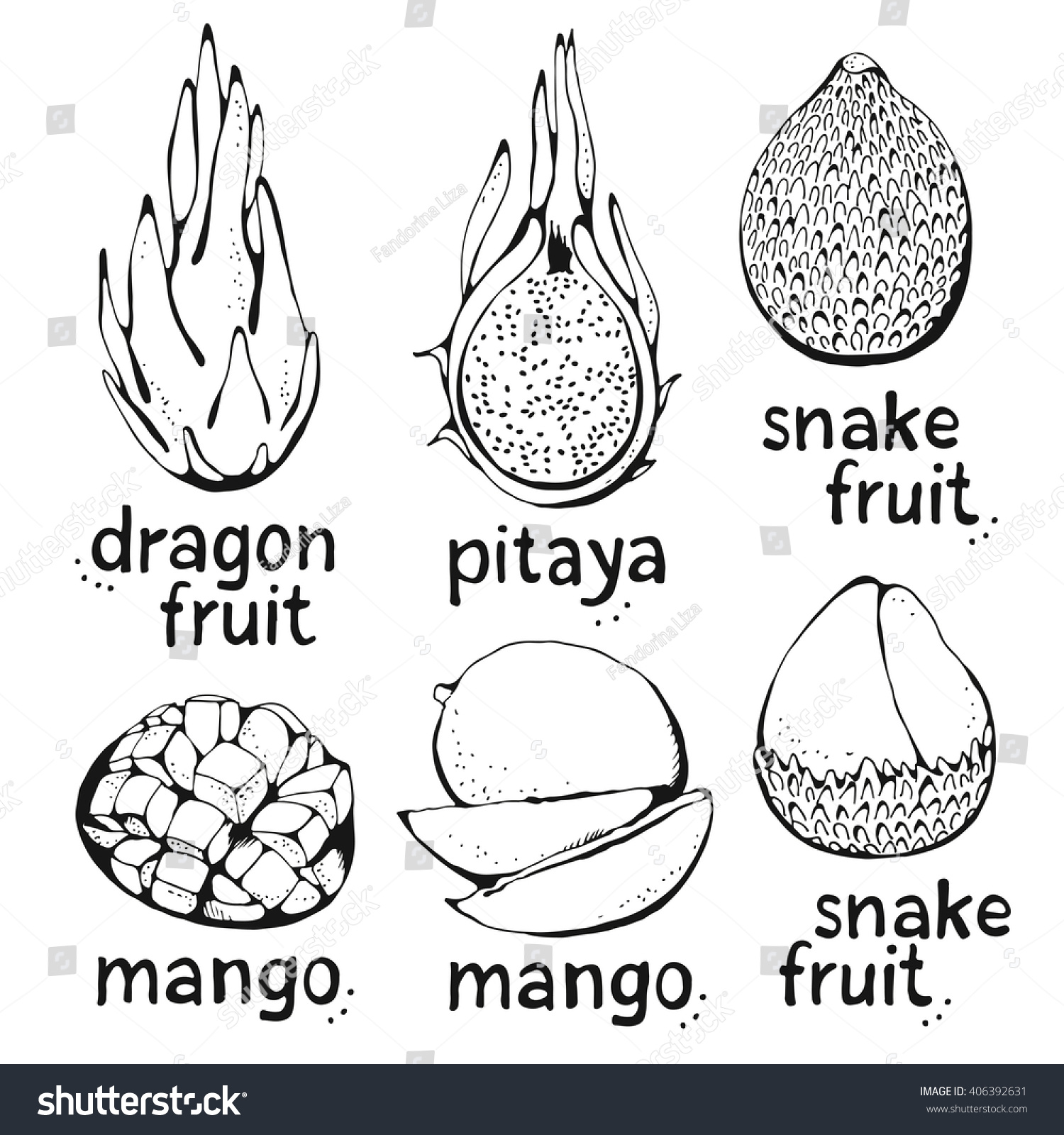 Hand Drawing Mango, Snake Fruit And Dragon Fruit (pitaya) Tropical Exotic  Vector
