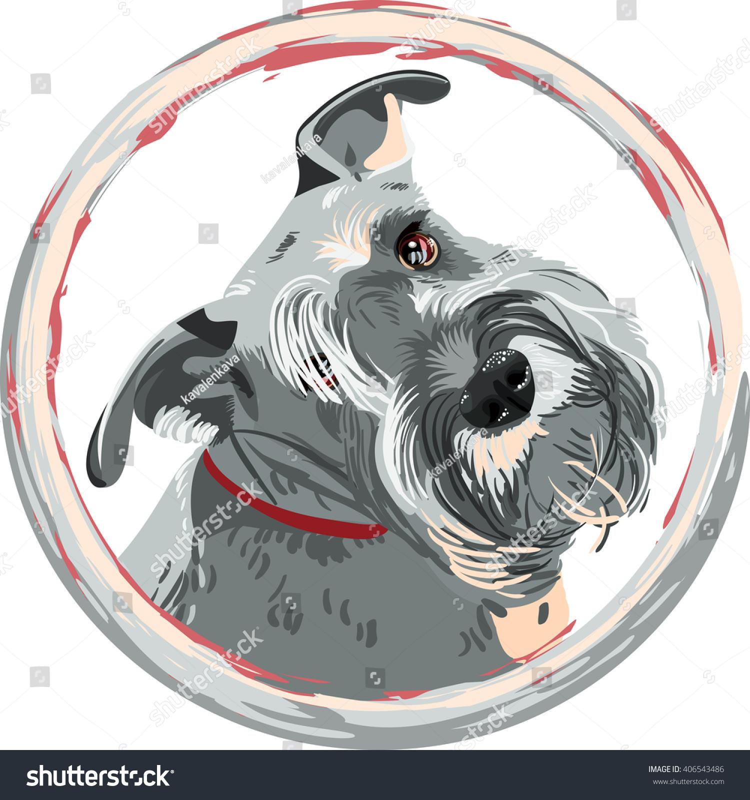Dog Breed Bearded Miniature Schnauzer Color Vector de stock406543486 ...