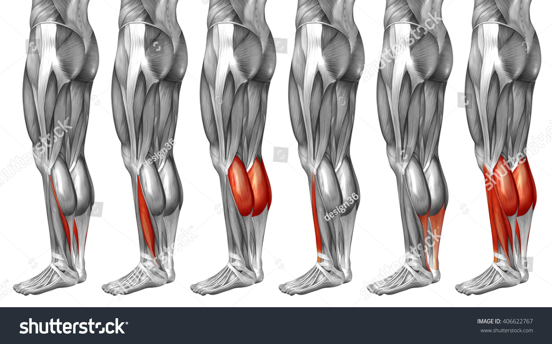 Royalty Free Stock Illustration Of Concept 3 D Human Lower Leg