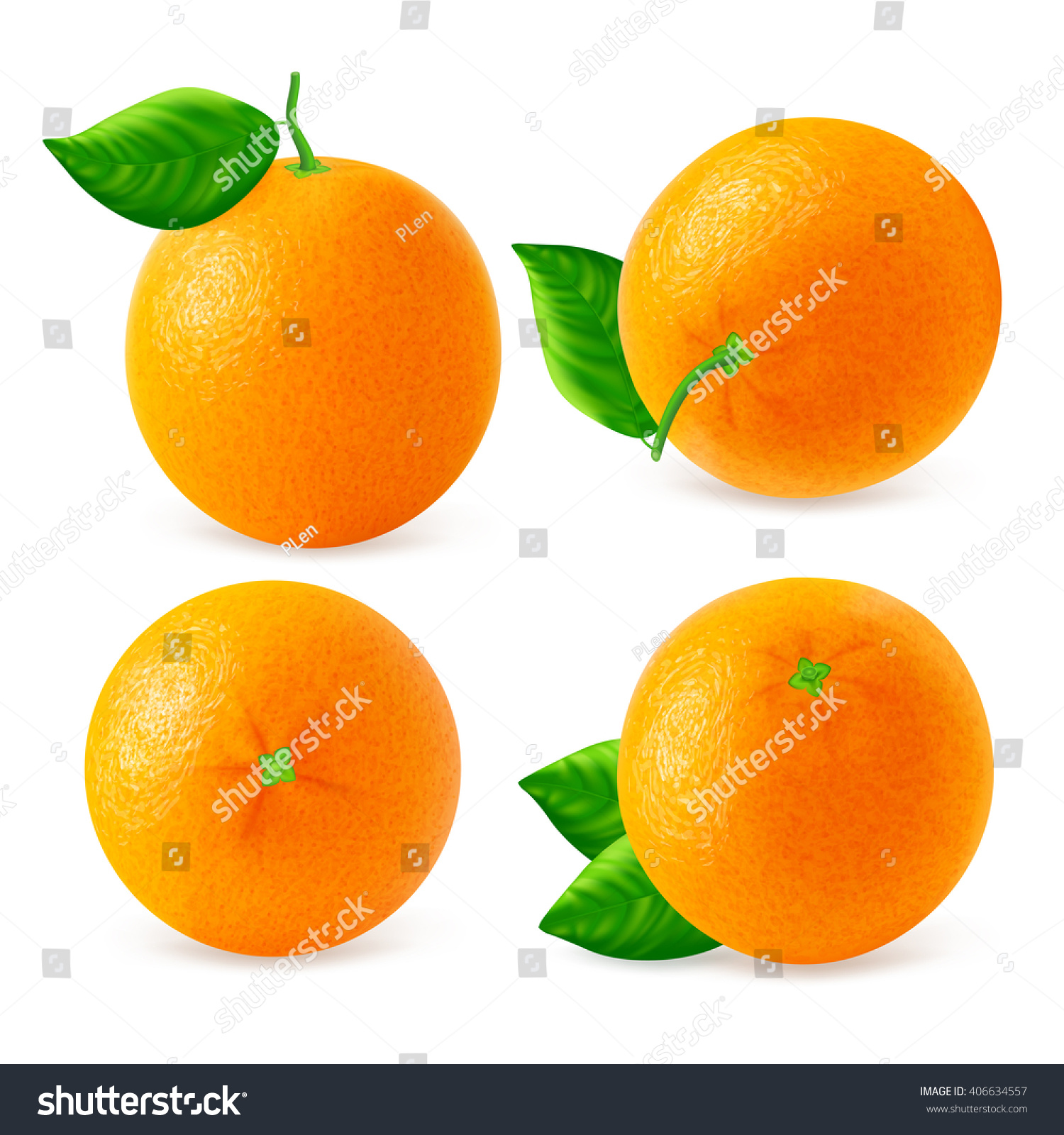 set different oranges fruits views isolated stock vector 406634557