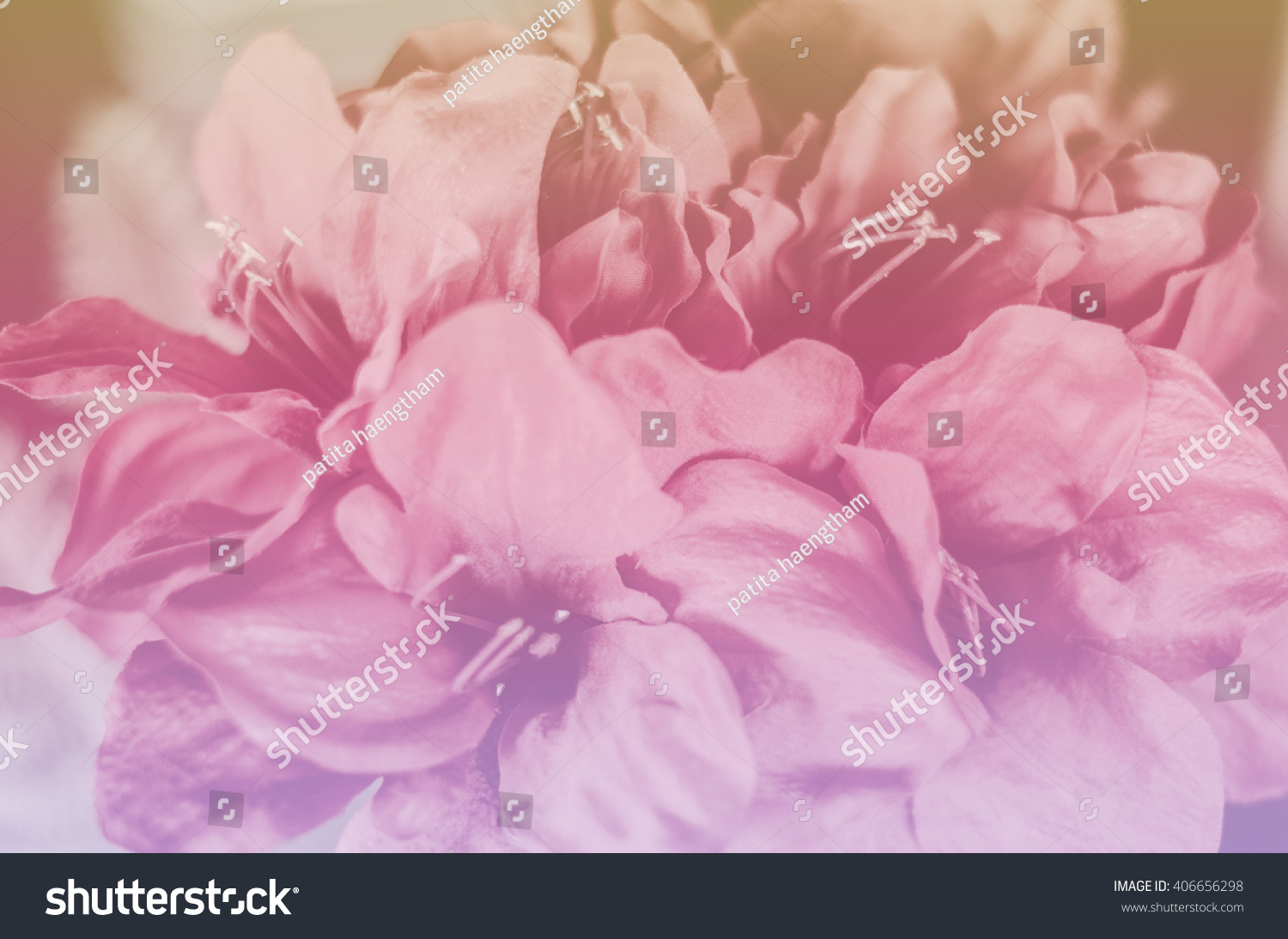 Flowers Background Blurred Blur Color Wallpaper Nature Soft Light Abstract