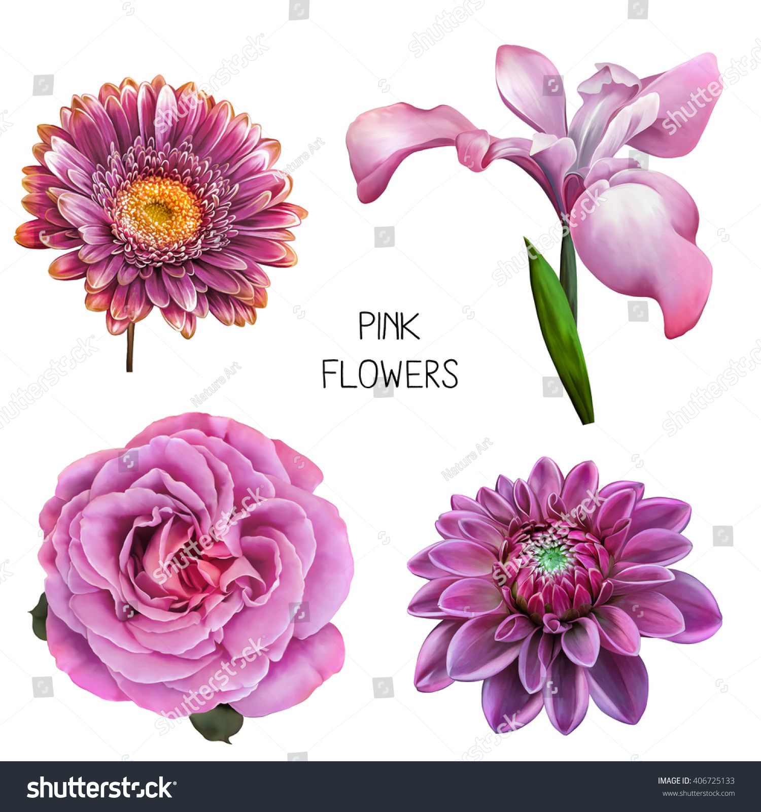 Illustration beautiful pink purple flowers set stock illustration illustration of beautiful pink and purple flowers set of spring flowers camellia rose izmirmasajfo