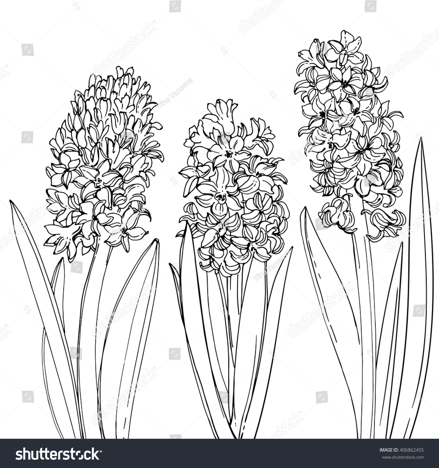 Line Drawing Spring Flowers : Hyacinths flowers line drawn on white stock vector