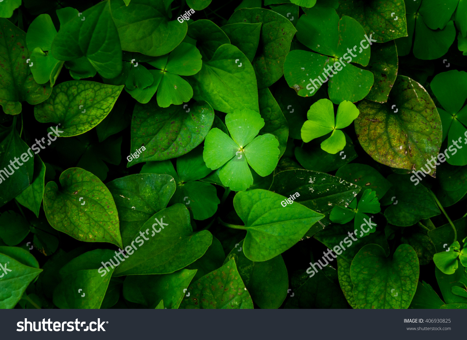 Dark Green Leaves Background Fresh Condition Stock Photo ...