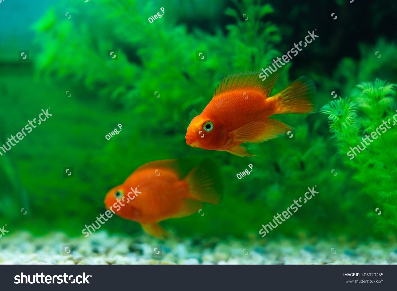 aquarium fishes in dark deep blue water | EZ Canvas