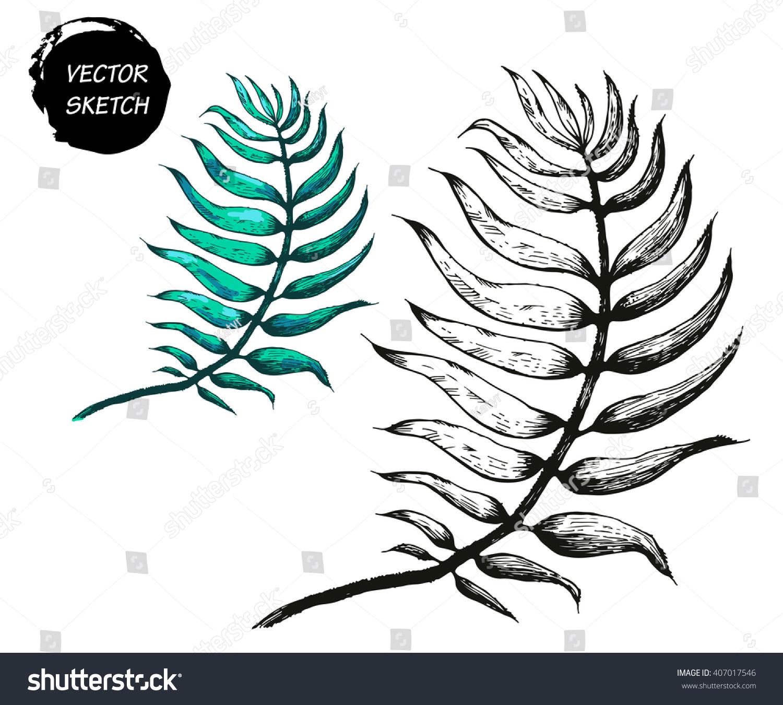 vector illustration palm tree leaf sketch stock vector 407017546