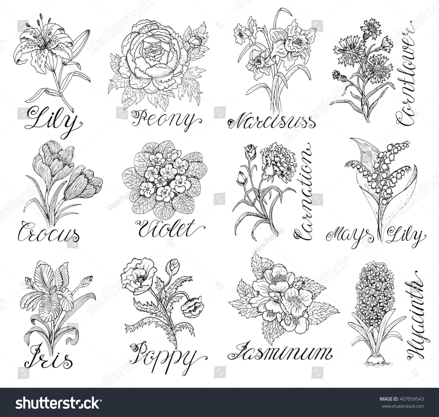 Line Drawing Violet : Set hand drawn graphic flowers lily vectores en stock