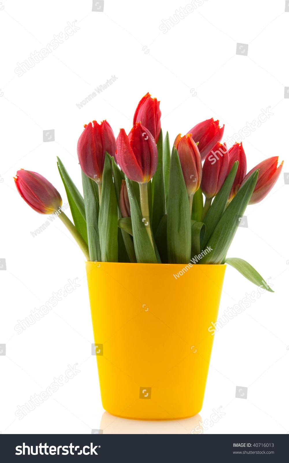 Bouquet Tulips Modern Yellow Flower Pot Stock Photo Edit Now