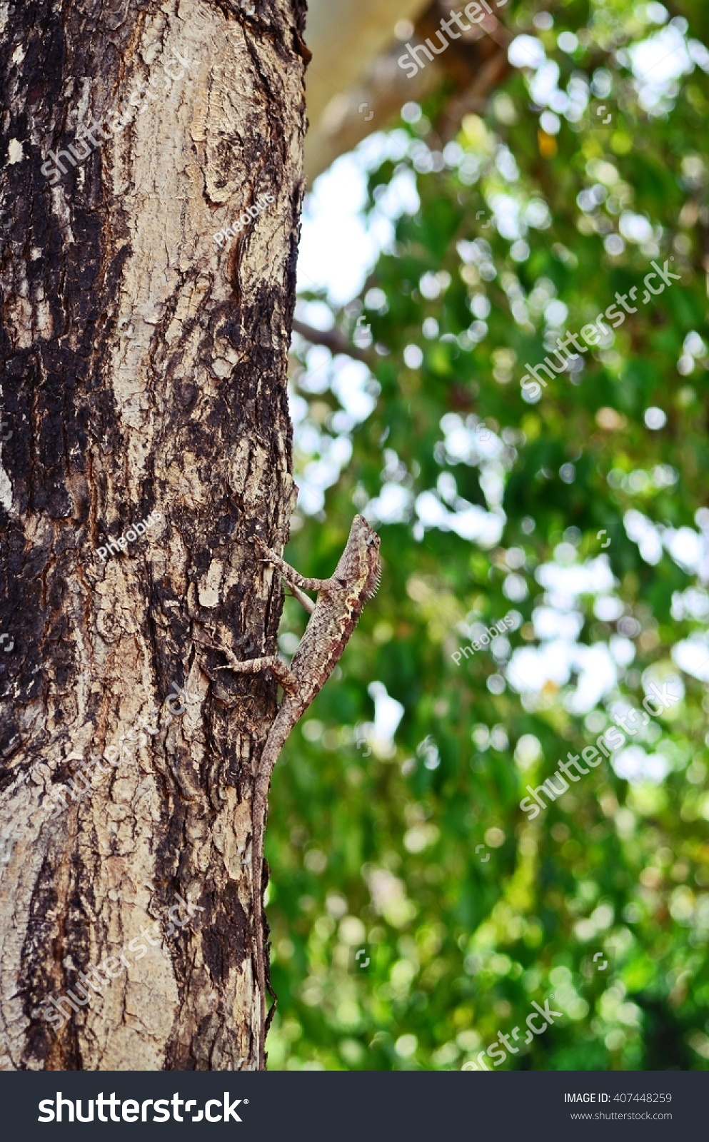 Tree Lizard Climbing Changing Color Like Stock Photo 407448259 ...