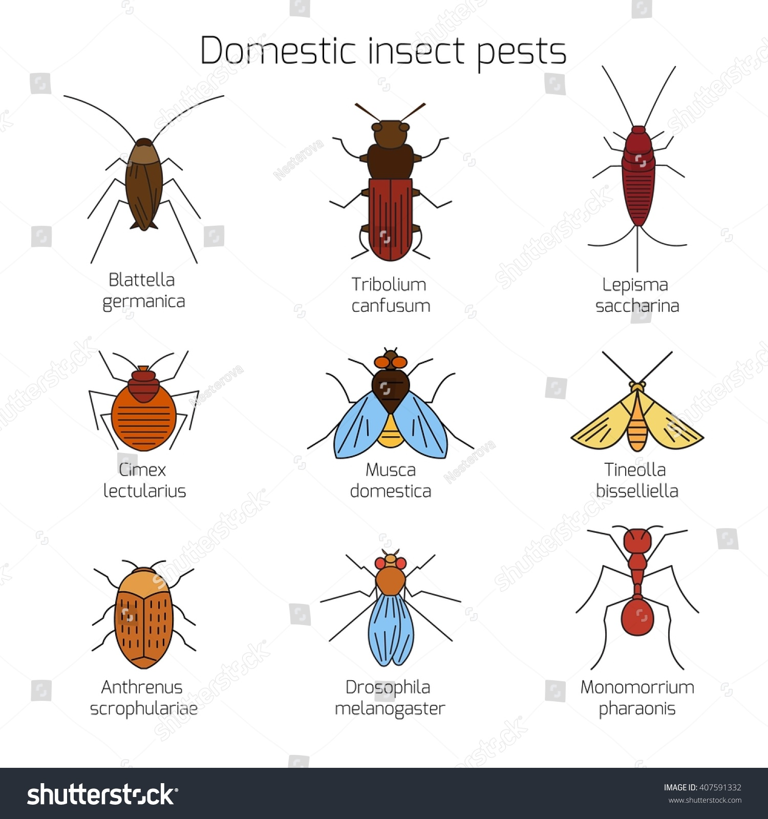 Set Domestic Insect Pests Thin Stock Vector