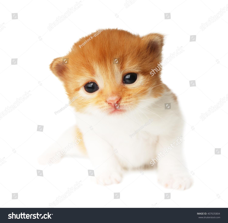 Cute Orange Red White Kitten Cute Stock Shutterstock