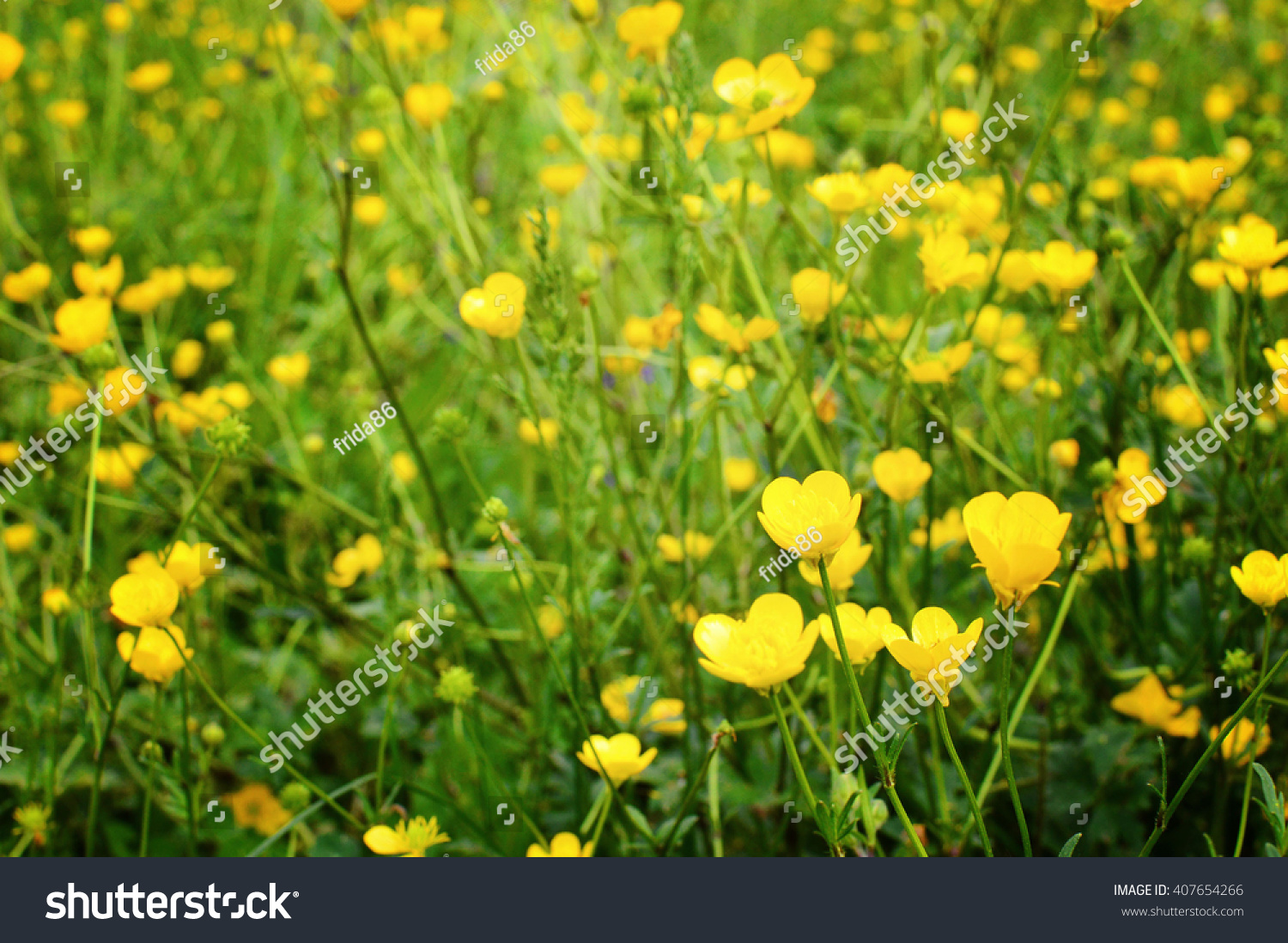 Green Grass With Yellow Flowers Ez Canvas