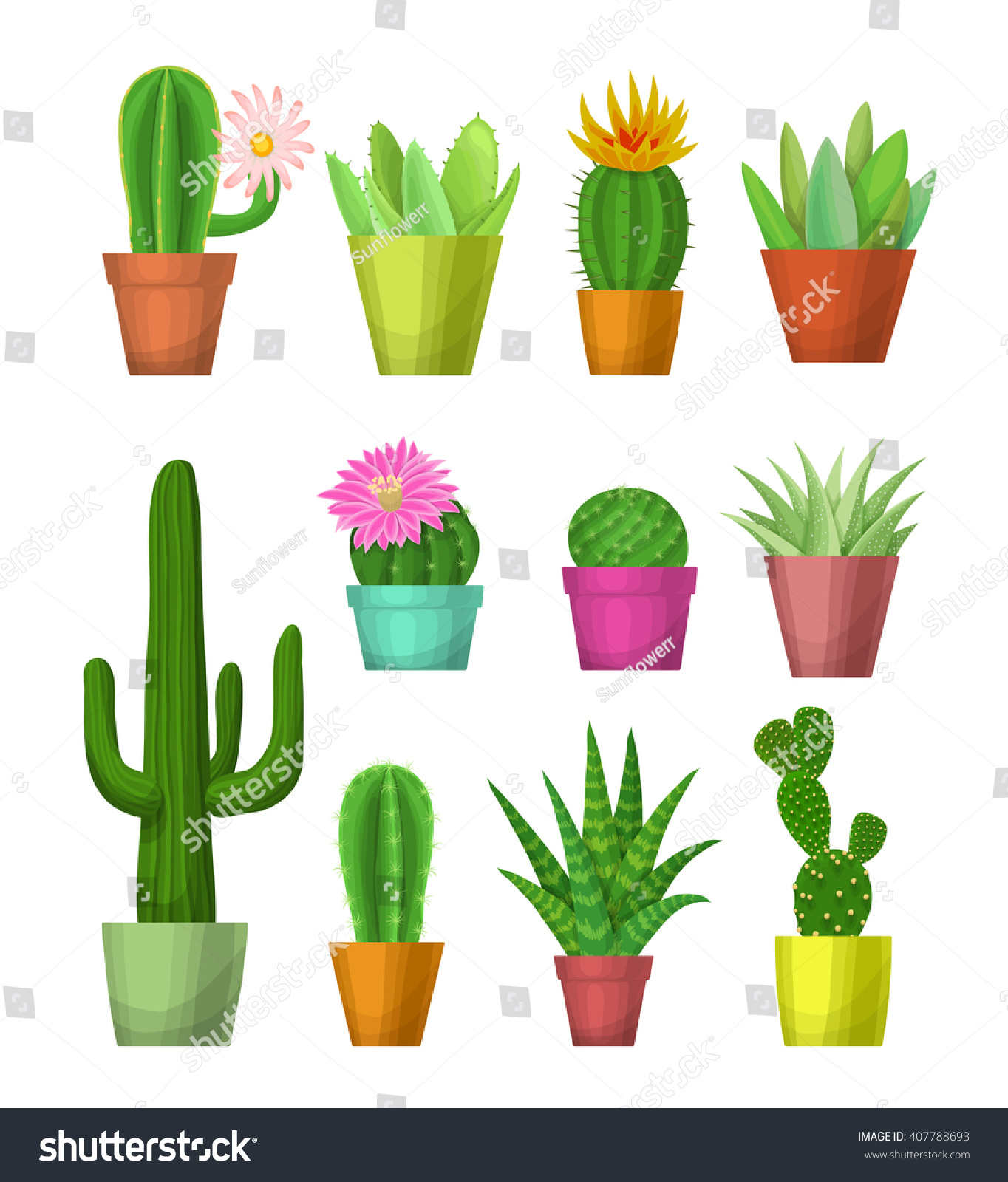 Cactus and succulent with flowers in pots hand drawn vector illustration room cactus and succulent on white background blooming cacti and succulents for