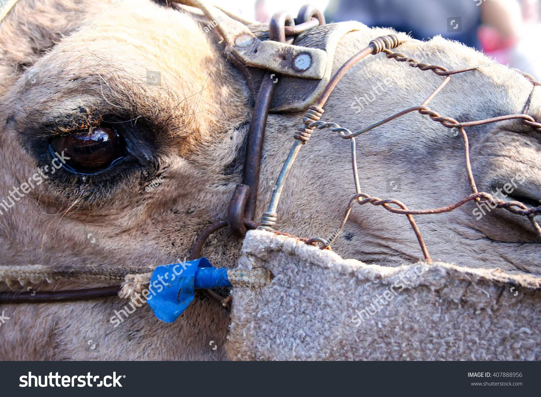 stock photo camel head closeup eye with rusty wire harness 407888956 camel head closeup eye rusty wire stock photo 407888956 shutterstock Wire Harness Assembly at bakdesigns.co