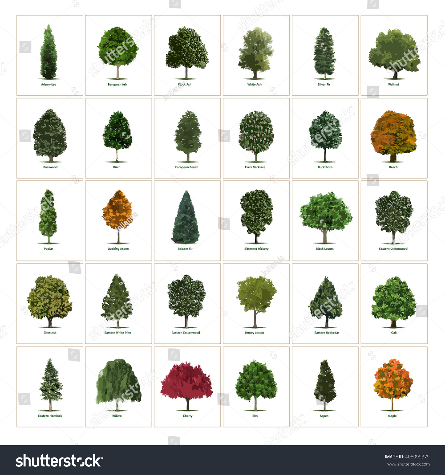 Thirty Different Vector Tree Illustrations Tree Stock Vector ...