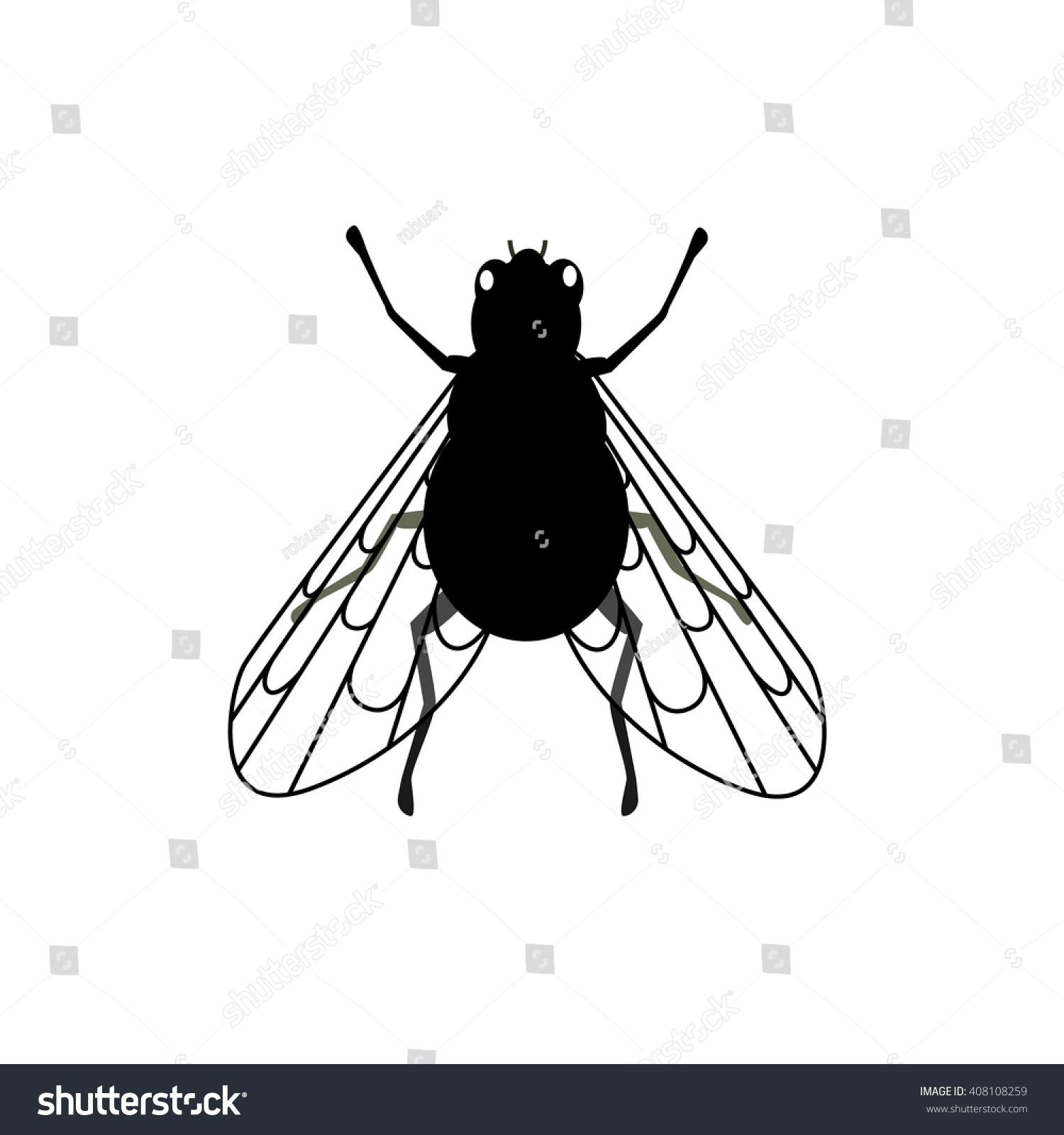Small Black Flies In Kitchen Cheap 2 Bedroom Townhomes Makrillarnacom