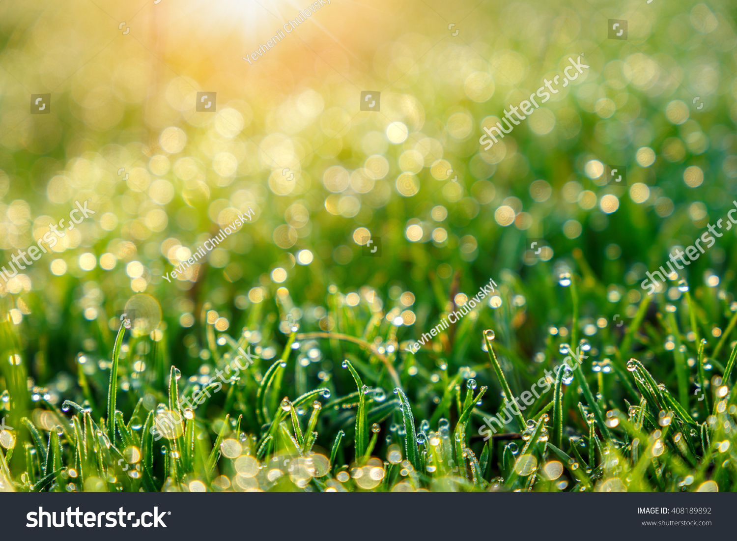 Bright vibrant green grass close-up. Abstract natural background ...