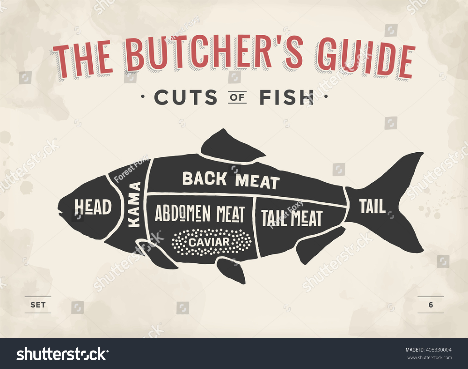 Cut meat set poster butcher diagram stock vector 408330004 for How to become a fishing guide