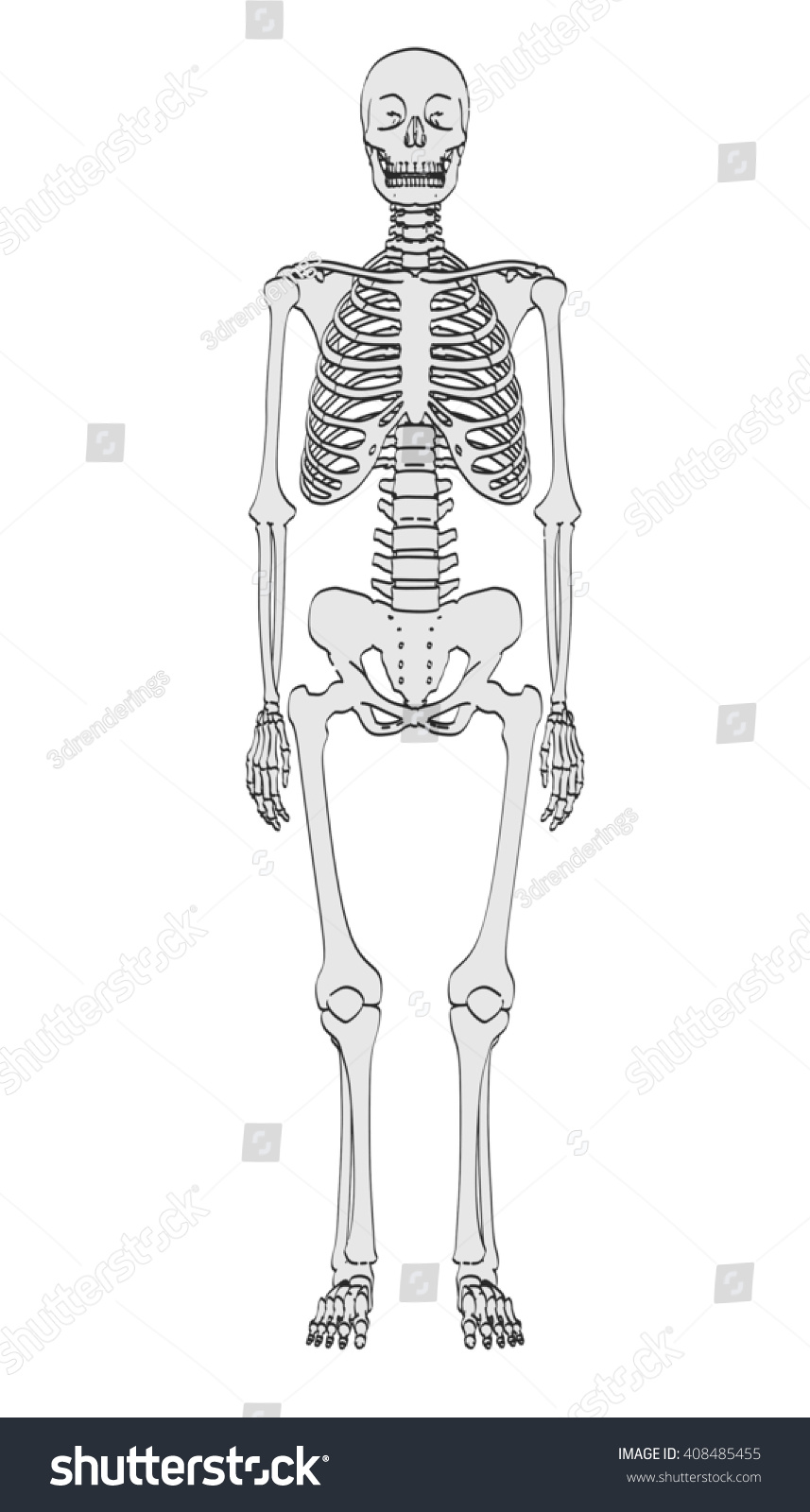 2 D Cartoon Illustration Human Skeleton Stock Illustration 408485455