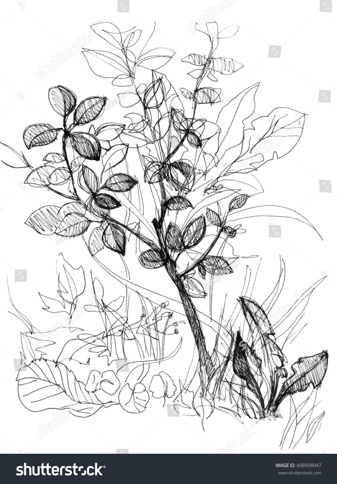 Botanical art coloring book - Detailed Forest Illustration Hand Drawn Amazing Botanical Artwork