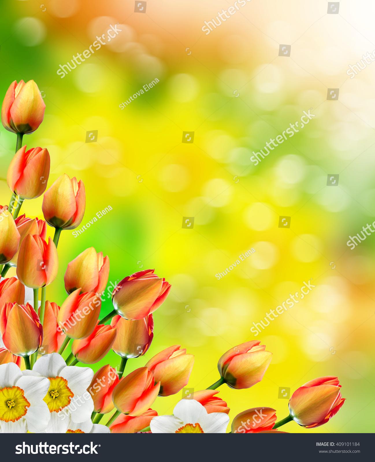 Spring Landscape Beautiful Spring Flowers Daffodils Stockfoto Jetzt
