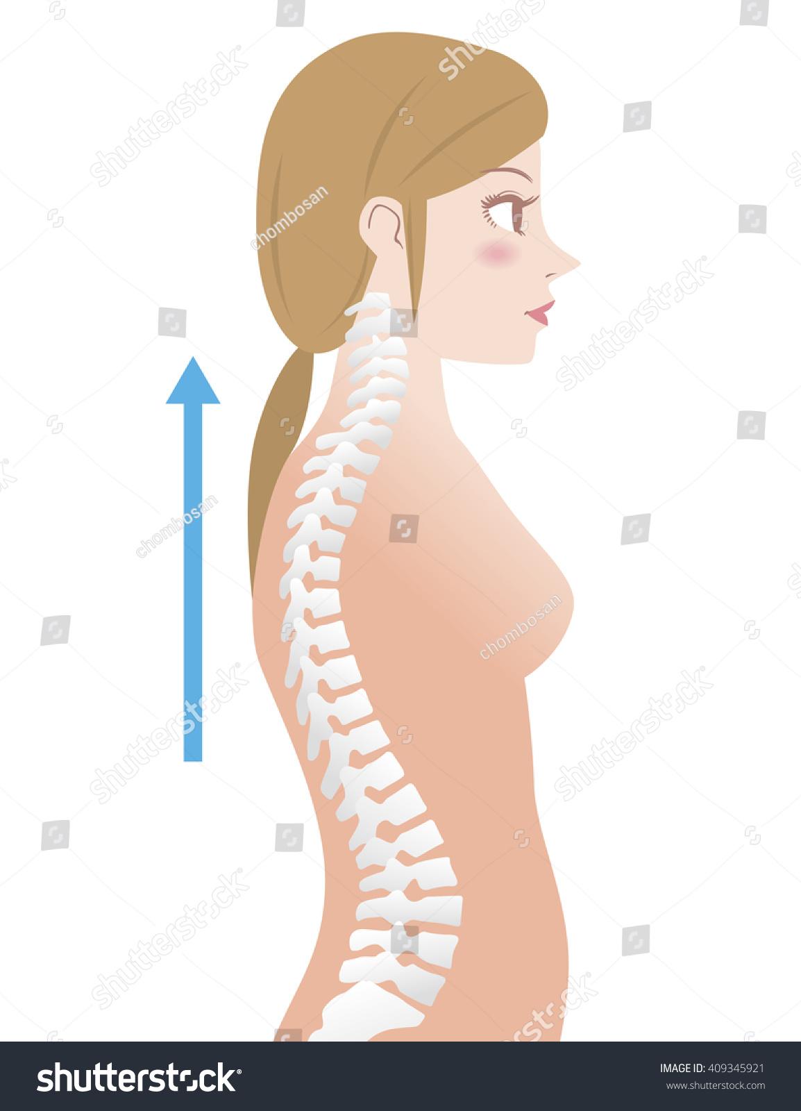 Good Posture Womans Body Silhouette Backbone Vectores En Stock ...