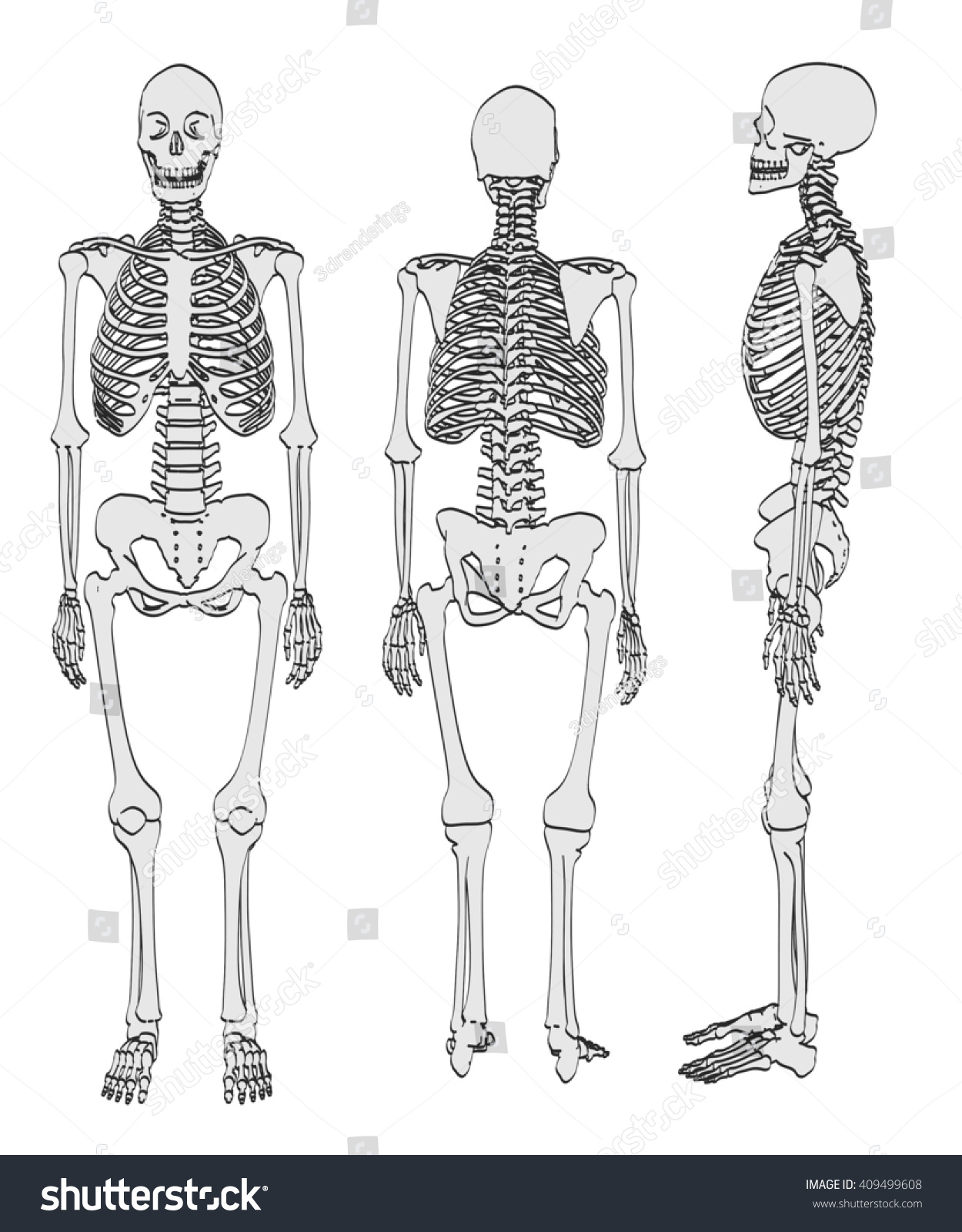 2 D Cartoon Illustration Female Skeleton Stock Illustration ...