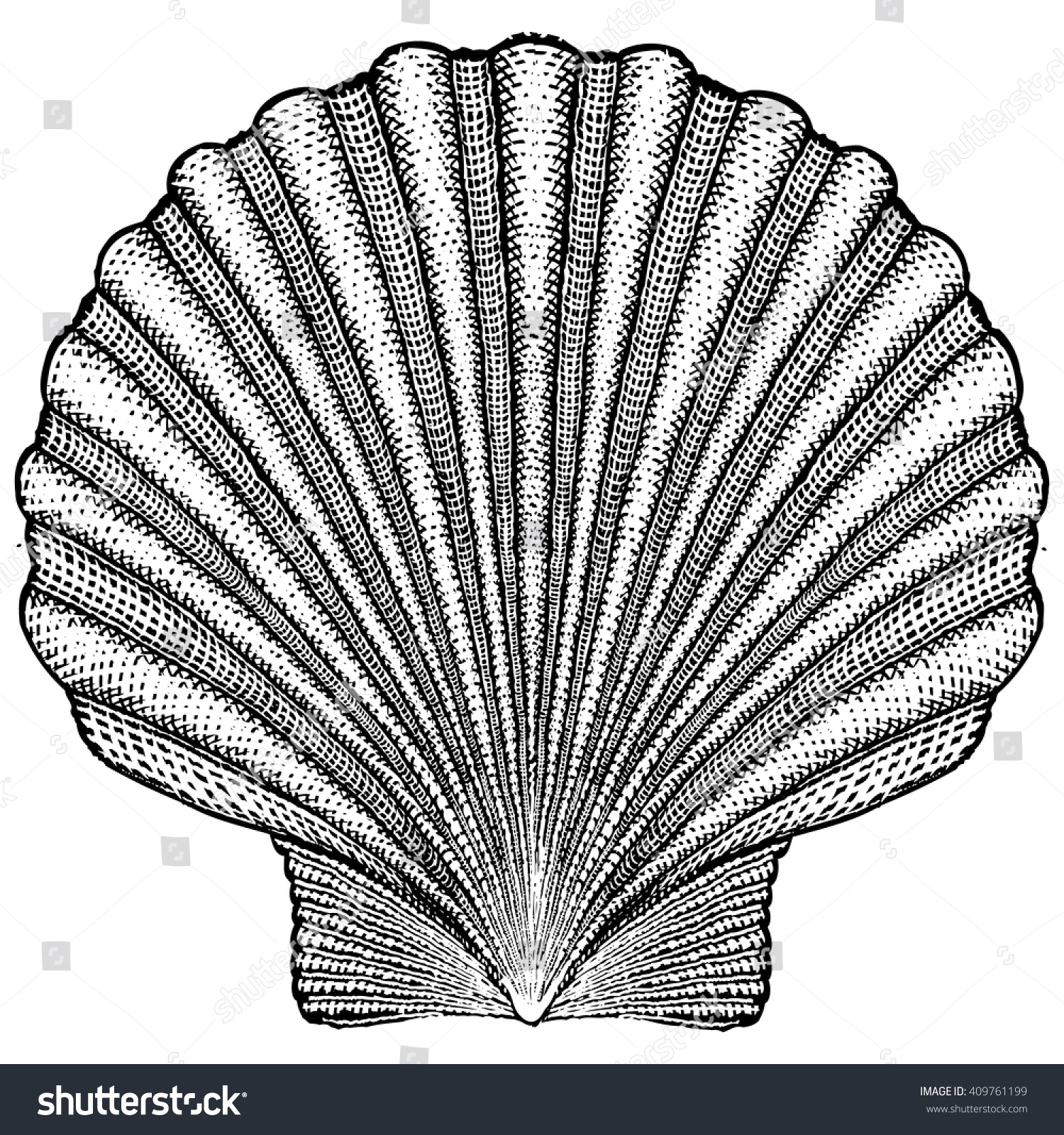 Scallop shell illustration stock vector 409761199 shutterstock scallop shell illustration biocorpaavc Image collections