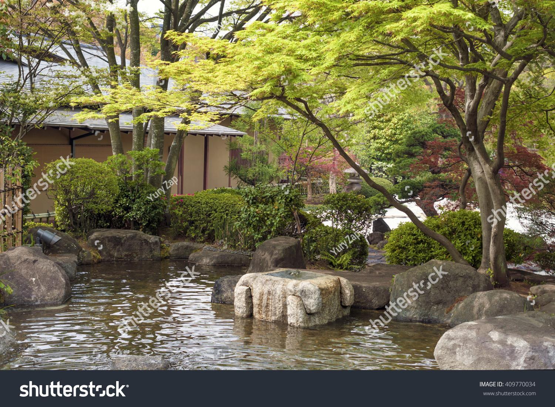 Fresh Japanese Maple Tree Bushes Around Stock Photo (Edit Now ...