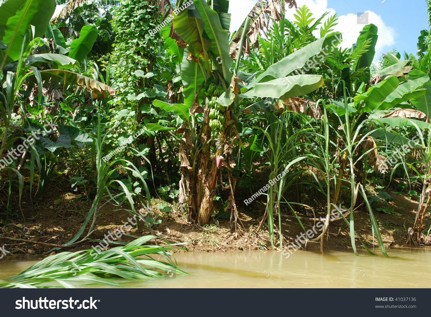 This Shot Depicts A Tropical Rainforest Greenery With Trees And ...