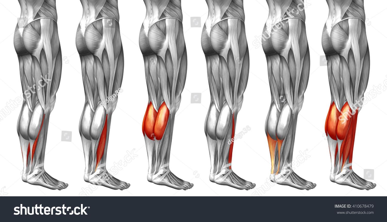 Concept 3 D Human Lower Leg Anatomy Stock Illustration 410678479