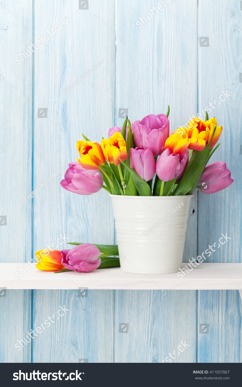 colorful tulip flowers - photo #45